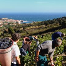 Vendanges-Collioure